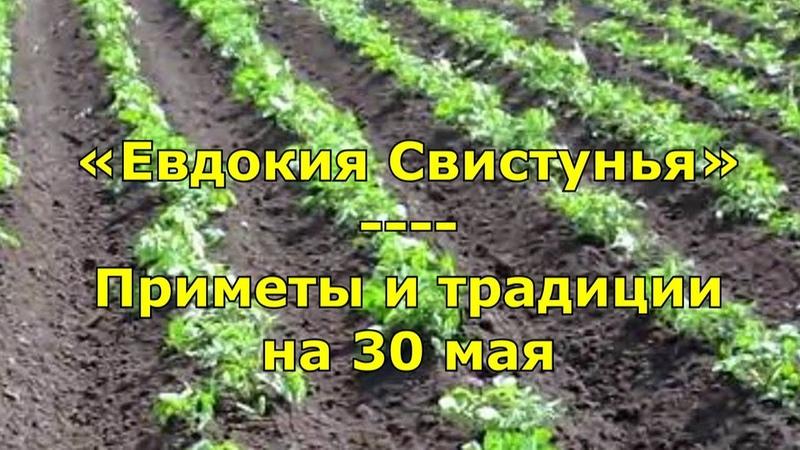 Народный праздник Евдокия Свистунья Приметы и традиции на 30 мая
