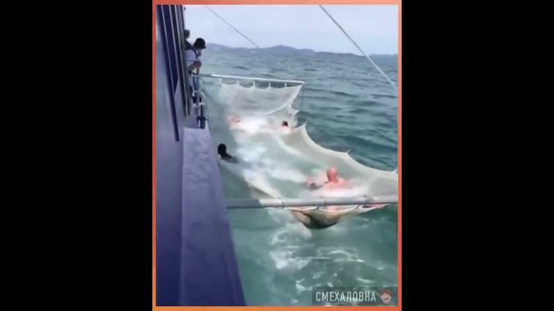 Ловля акул на живца