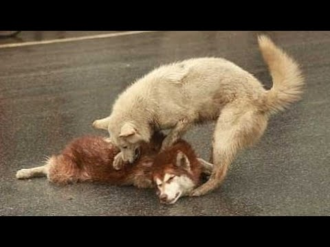20 Душераздирающих Случаев с Животными, которые Разобьют Ваше Сердце Вдребезги!