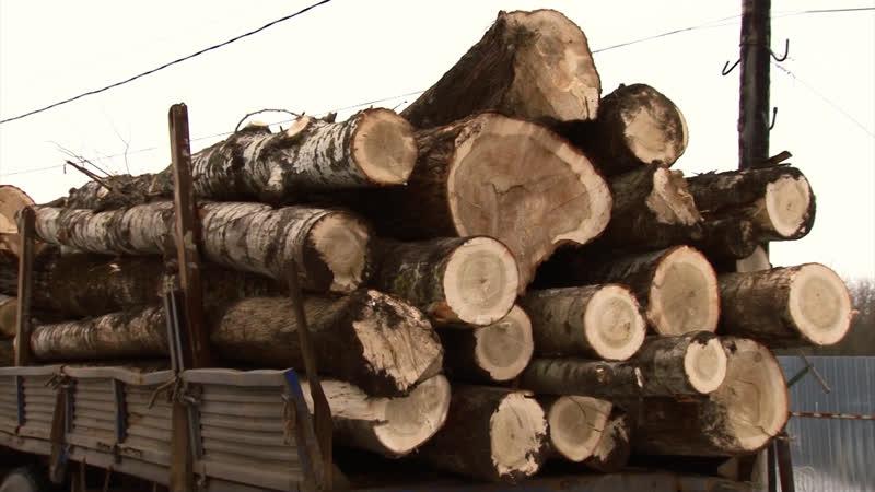 Дерзкого курянина обвиняют в незаконной заготовке древесины