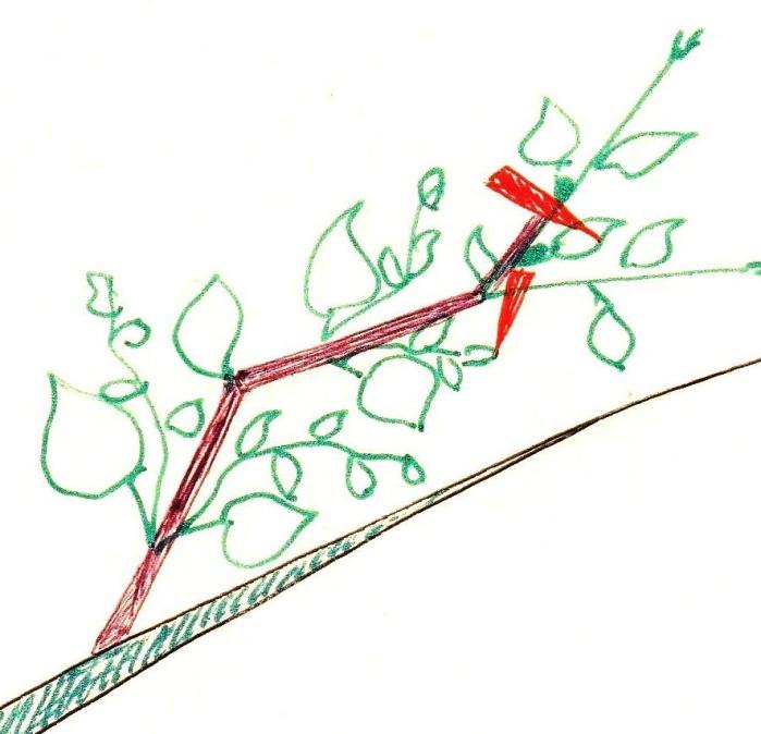 Как сделать Чудо-Дерево, забитое плодами., изображение №4