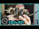 지구에서 가장 큰 뱀이라는 티타노보아 잡았음ㅋㅋ 리보 공룡피규어 꿀잼 | 55