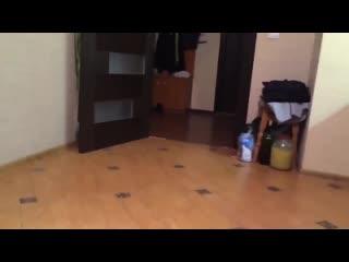 Видео приколы с котами 2019 смешной прикол с котом