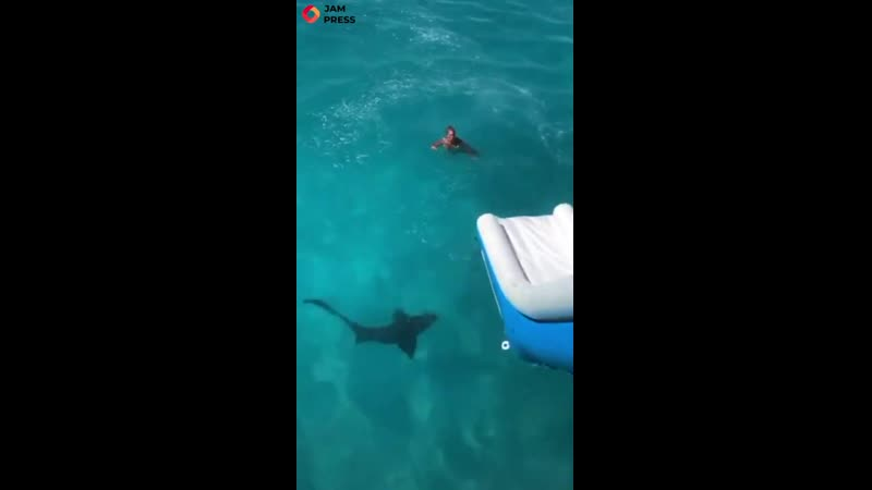 Shark week came early for a woman in the Bahamas after being greeted by a very curious 8ft shark