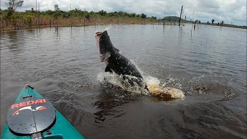 QUANDO A GENTE CONTA PASSA POR MENTIROSO Pescaria Pirarucu gigante