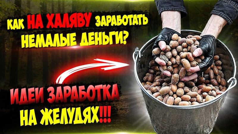 Заработок 250 000 рублей за центнер без копейки вложений.Деньги под ногами ч.18