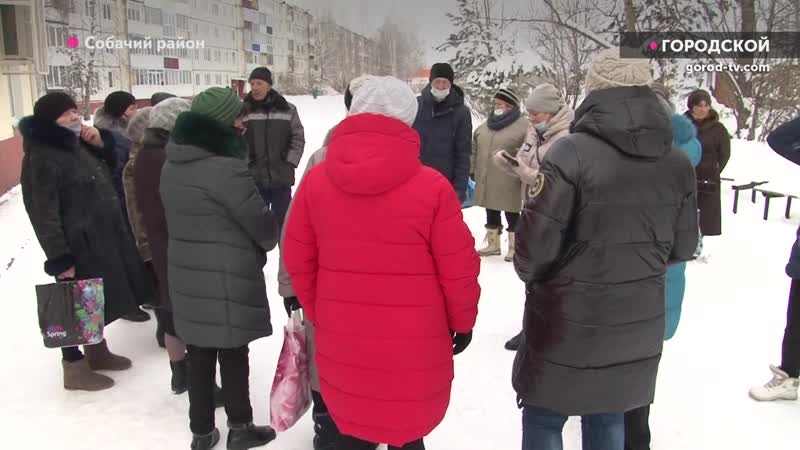 Бродячие собаки оккупировали город в Брянской области