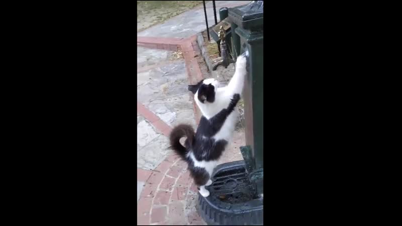 Outdoor cat politely requests a little water And the human delivers like a true bro