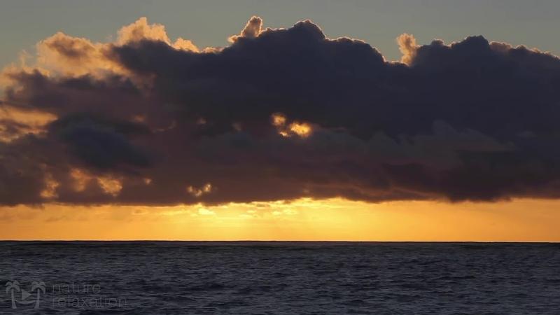 Погружает зрителей в зрелища и звуки одного из самых чистых и живописных тропических островов в мире.
