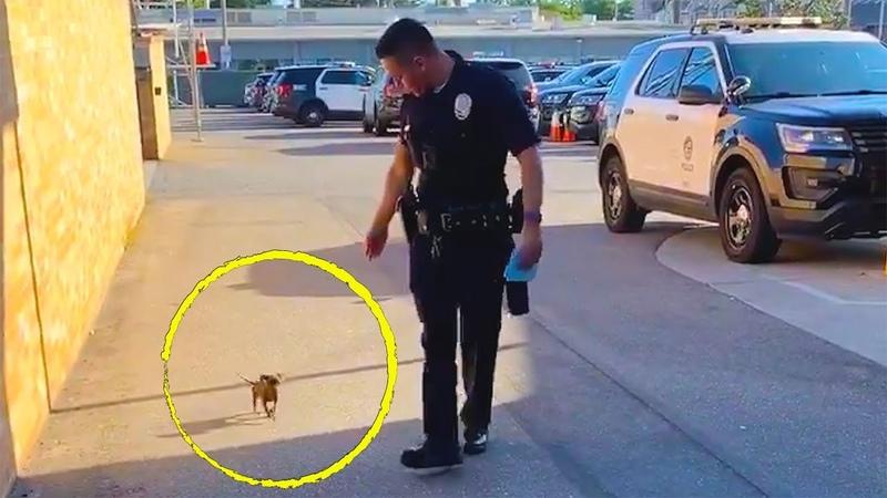 Щенок подходит к полицейскому и происходит что то невероятное из за чего он забирает его в участок