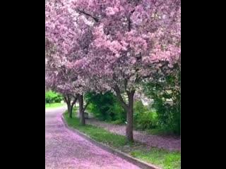 Отвлекитесь от глобального и полюбуйтесь цветением яблонь в Екатерининском парке.
