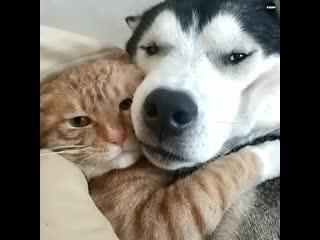 Вот почему собаки самые удивительные создания)