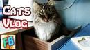Кошачья жизнь Котики играют. Приколы с котами. Милые котики.