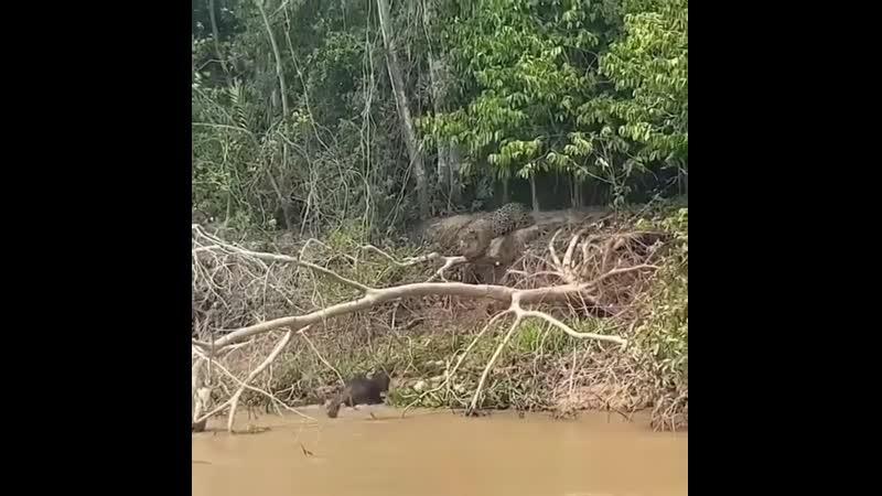 In Pantanal Brazil