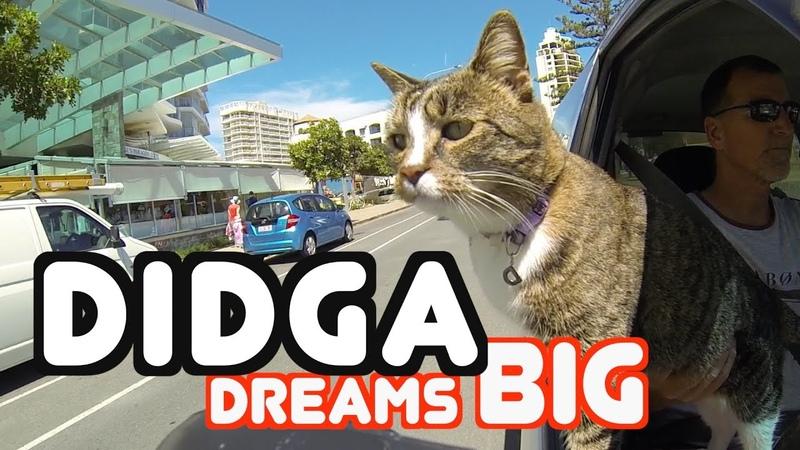 Didga Dreams BIG Cats Amazing Trick Compilation