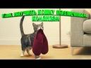 КАК НАУЧИТЬ КОШКУ РАЗЛИЧНЫМ КОМАНДАМ ДРЕССИРОВКА КОШЕК TRAINING CATS