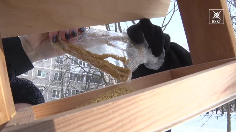 Юнармейцы и волонтёры открыли птичье кафе Всероссийская акция Покорми птиц зимой в Воскресенске