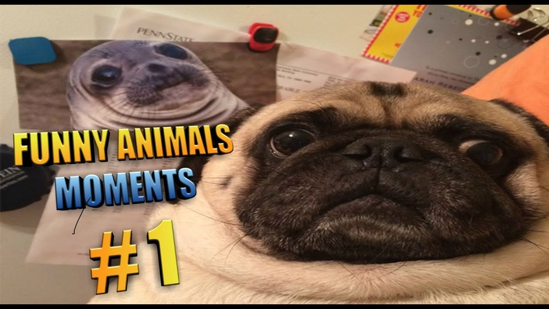🤣Funniest 🐶Animals😻 Moments Video 1 To Laugh - Best 🐰🐦