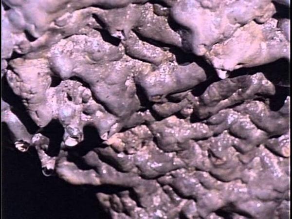 30 1991 Науру Каменная планета Подводная одиссея команды Кусто