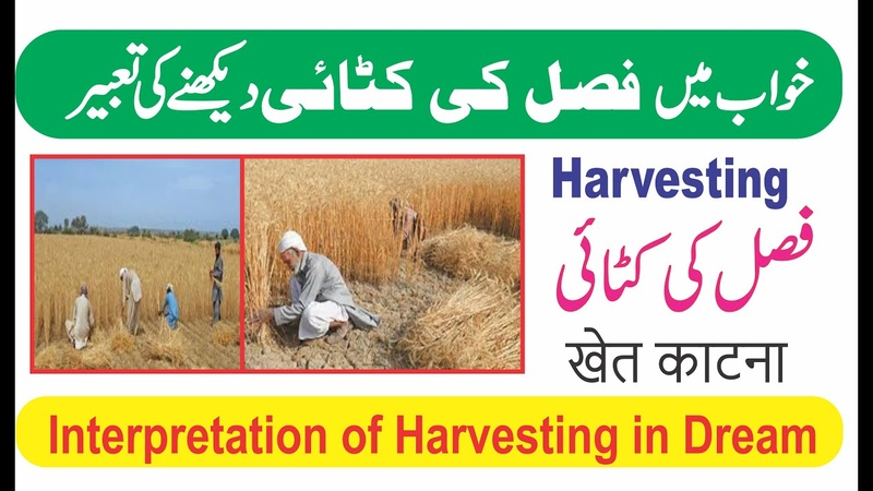 Interpretation of Harvesting in dream Khwab Mein Fasal katne ki tabeer خواب میں فصل کاٹنا