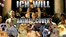 Rammstein Ich Will Animal Cover