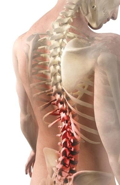 ОСЕВШИЙ ПОЗВОНОЧНИК С возрастом мускулы человека становятся дряблыми, ткани не получают достаточного питания, вследствие чего хрящи и диски между позвонками разрушаются. Позвоночник «усыхает»,
