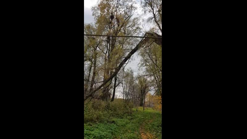 Мордовия Ичалковский район дерево упало на провода