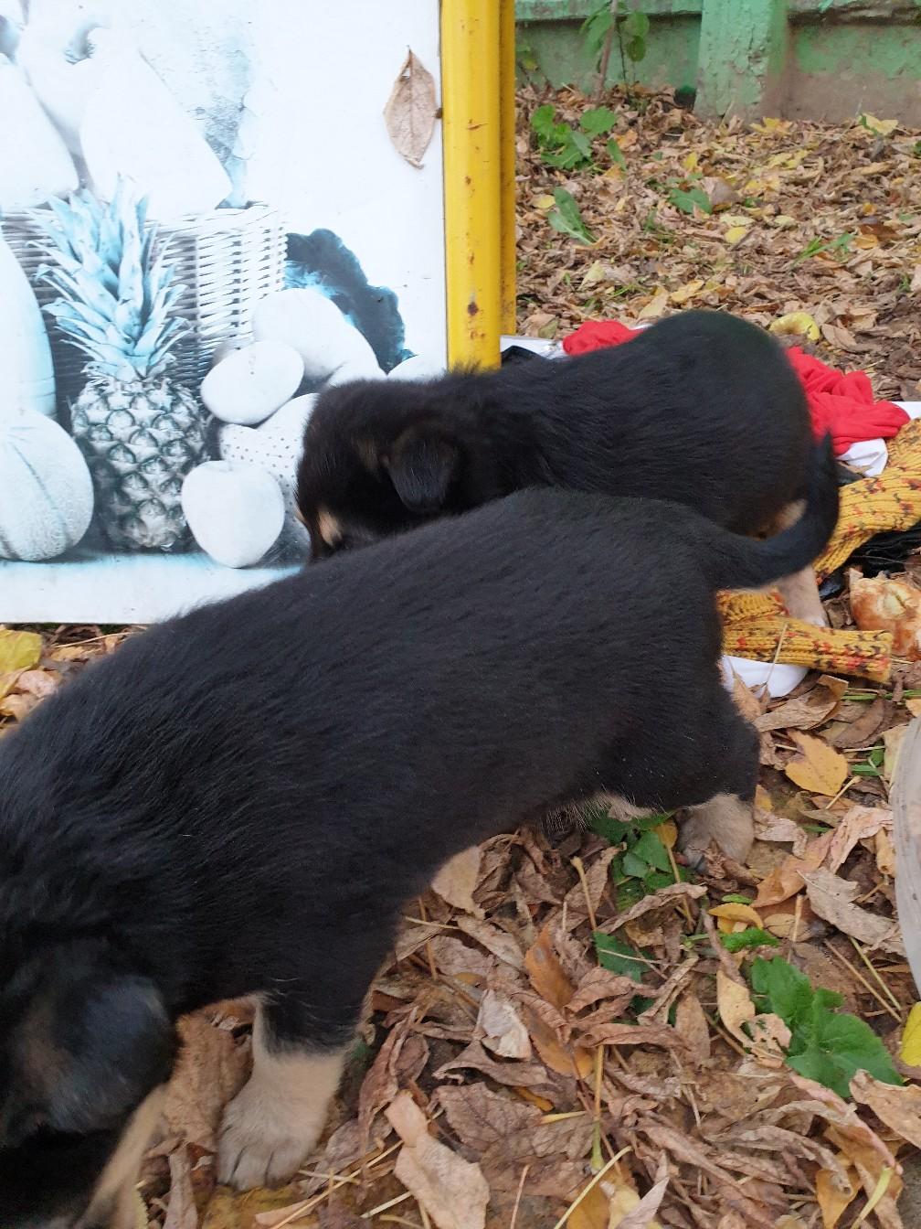 Двоих маленьких щеночков подкинули к магазину на