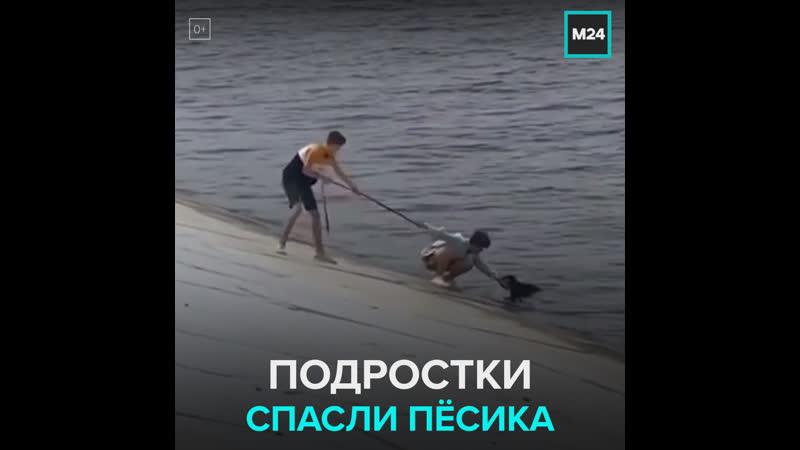В Перми подростки спасли из реки собаку Москва 24
