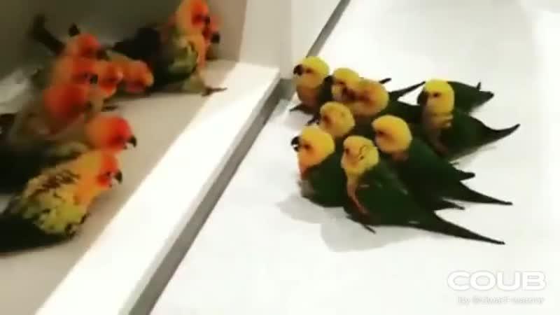The gang wars