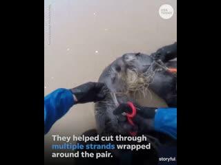 Добрые люди помогли животным освободиться от лески