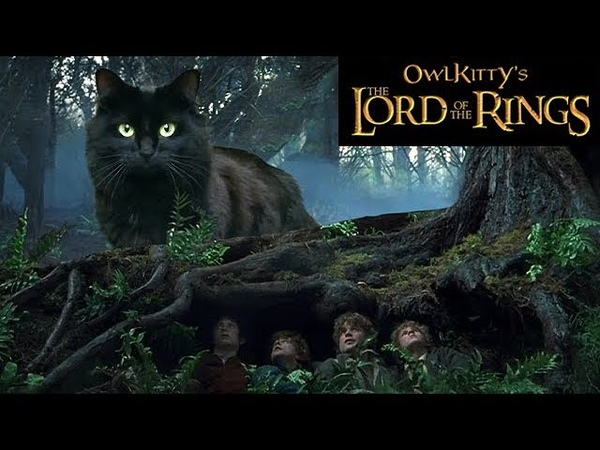 Lord of the Rings My Cat