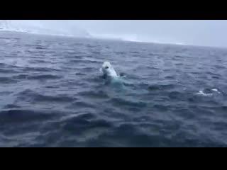 Просто кореша играют в мячик посреди моря