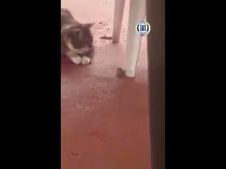 Взяли кота, чтобы он ловил мышей... Ну, в принципе, он справился