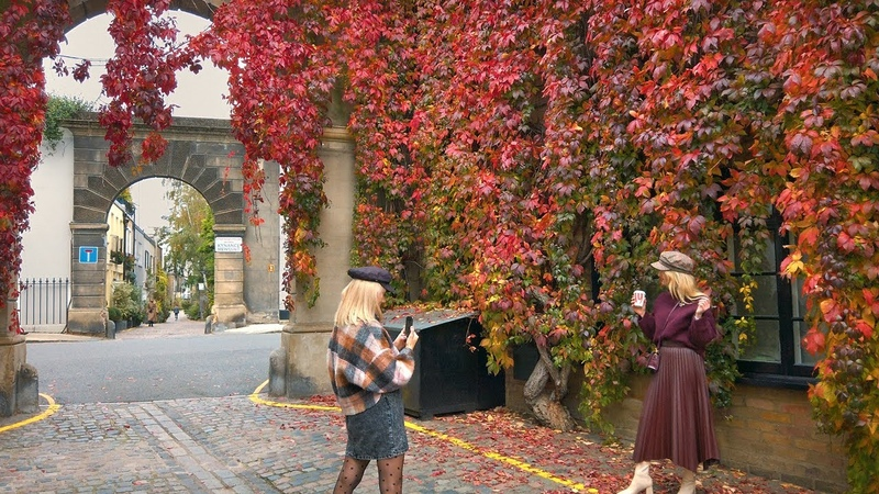 KENSINGTON London Walk incl. Kynance Mews Red Ivy Leaves on a Grey Autumn Day