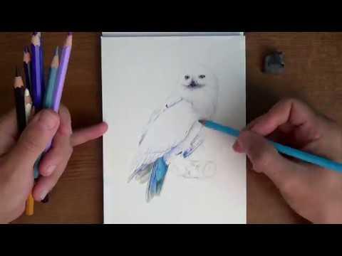 Букля из Гарри Поттера рисунок карандашами