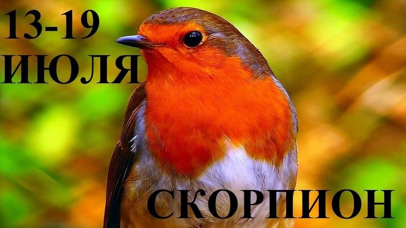 СКОРПИОН 13 19 ИЮЛЯ ГОРОСКОП ОТ ЛИС ФИЗАЛИС