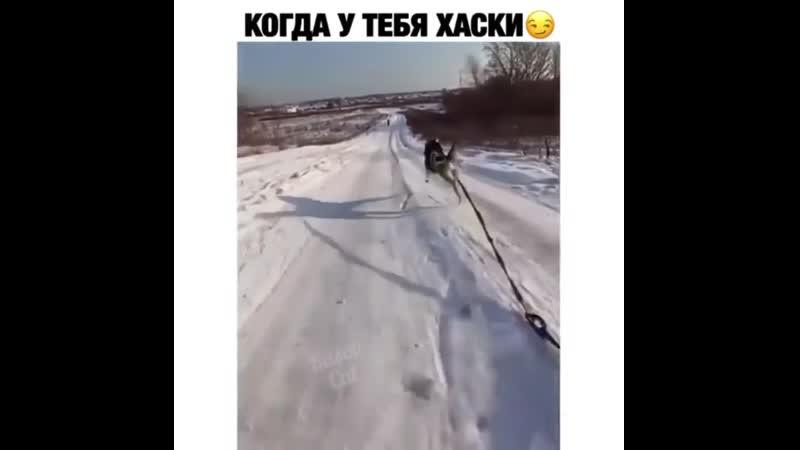 Вы видели лицо собаки когда человек чуть не проехался по нему Как он начал бежать ещё быстрее