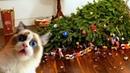 14 новогодних лайфхаков Как защитить елку на Новый год от кота – Смешные кошки МатроскинТВ