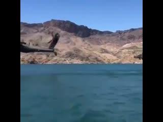 Ударные вертолёты AH-64E Apache индийской армии проходят над высокогорным озером Пангонг-Цо в Тибете, через которое проходит лин