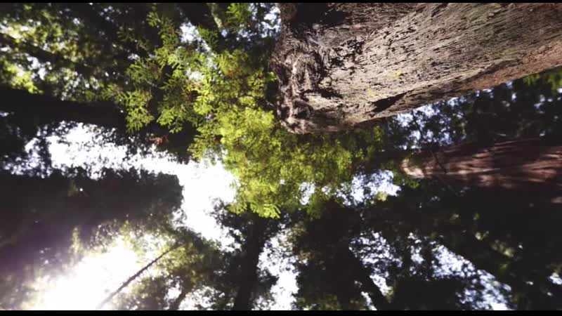 EXPERIENCE THE MAGIC OF REDWOODS
