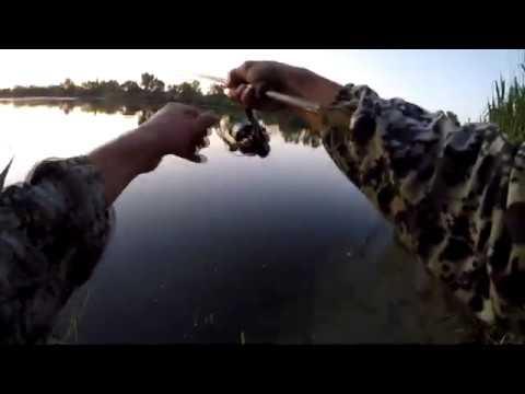 Лодочная Мини рыбалка с начинающими фидеристам и отводной вместо донки