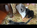 Котята ищут дом