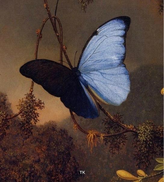 Мартин Джонсон Хед - художник из Америки, чьи картины трудно забыть Невероятно живые, сказочно яркие, они не были широко известны даже среди современников художника. Ну, не пользовались спросом