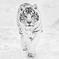 Фотография профиля Tebriz Alizade ВКонтакте