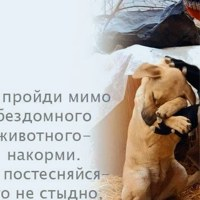 Фотография Игоря Семенова ВКонтакте