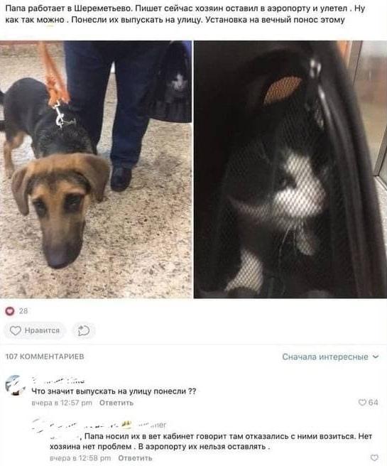 Пассажир бросил кошку и собаку в Шереметьево.