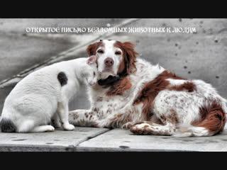 Открытое письмо бездомных животных к людям