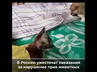Животные в России под защитой