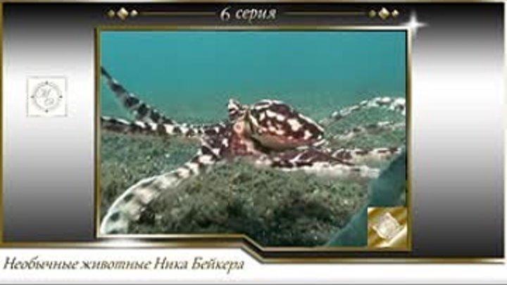 Необычные животные Ника Бейкера 6 серия Осьминог подражатель Weird Creatures with Nick Baker 1х6 The mimic octopus